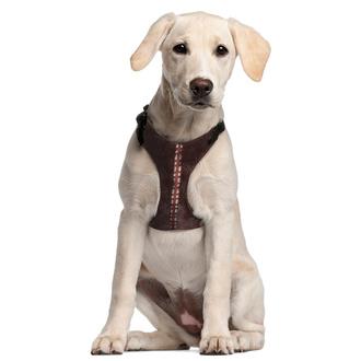 Geschirr für einen Hund STAR WARS - CHEWBACCA, CERDÁ, Star Wars
