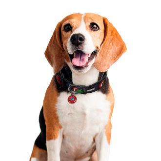 Halsband für einen Hund MARVEL, CERDÁ, Marvel Comics