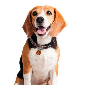 Halsband für einen Hund STAR WARS - CHEWBACCA, CERDÁ, Star Wars